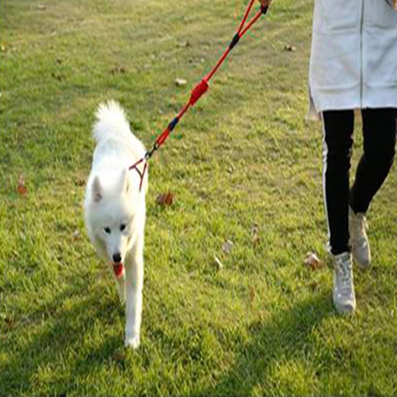 EVA Pet Leash With Adjustable Collar Strap - Large